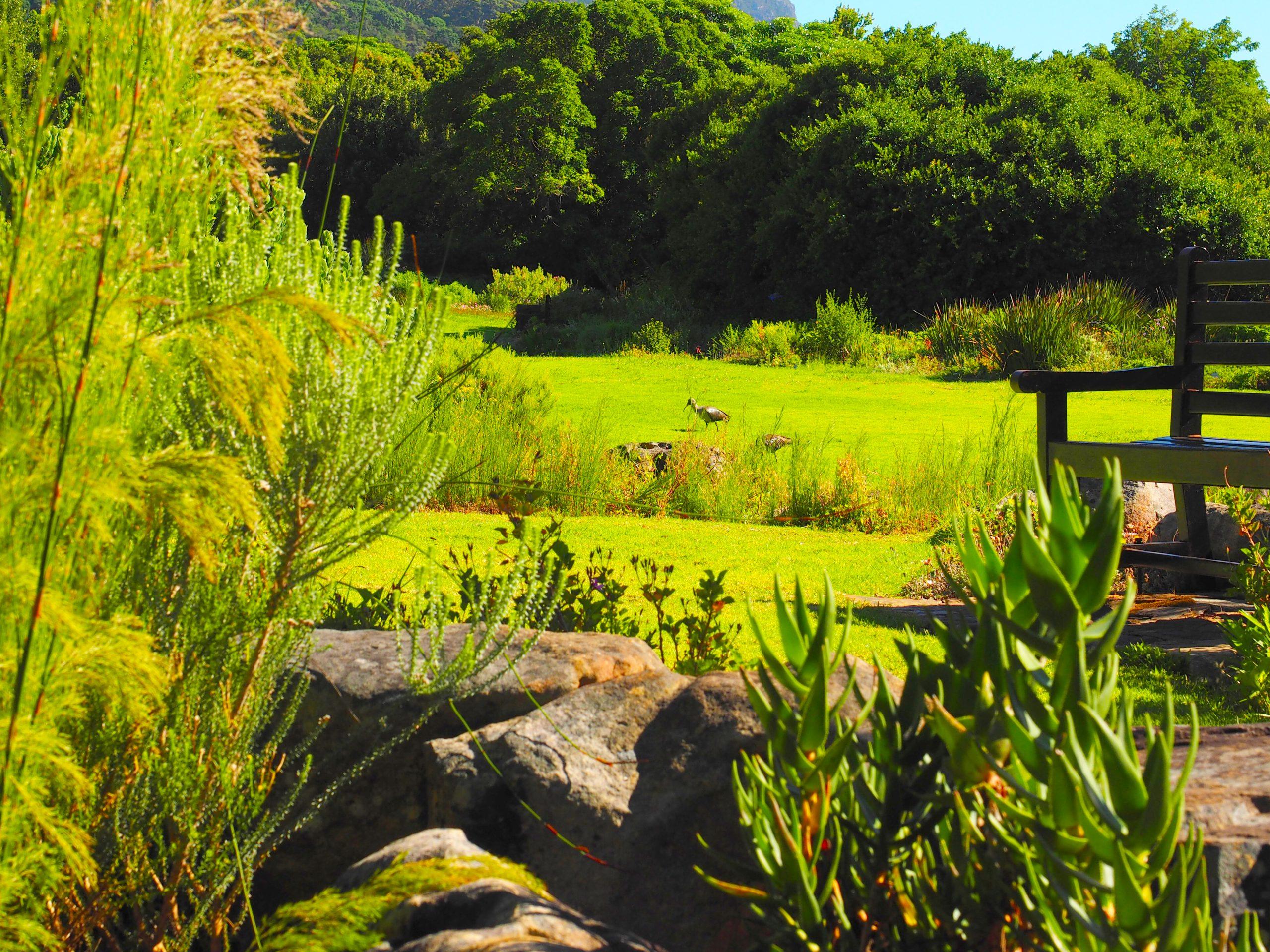 Giardino Botanico di Kirstenbosch