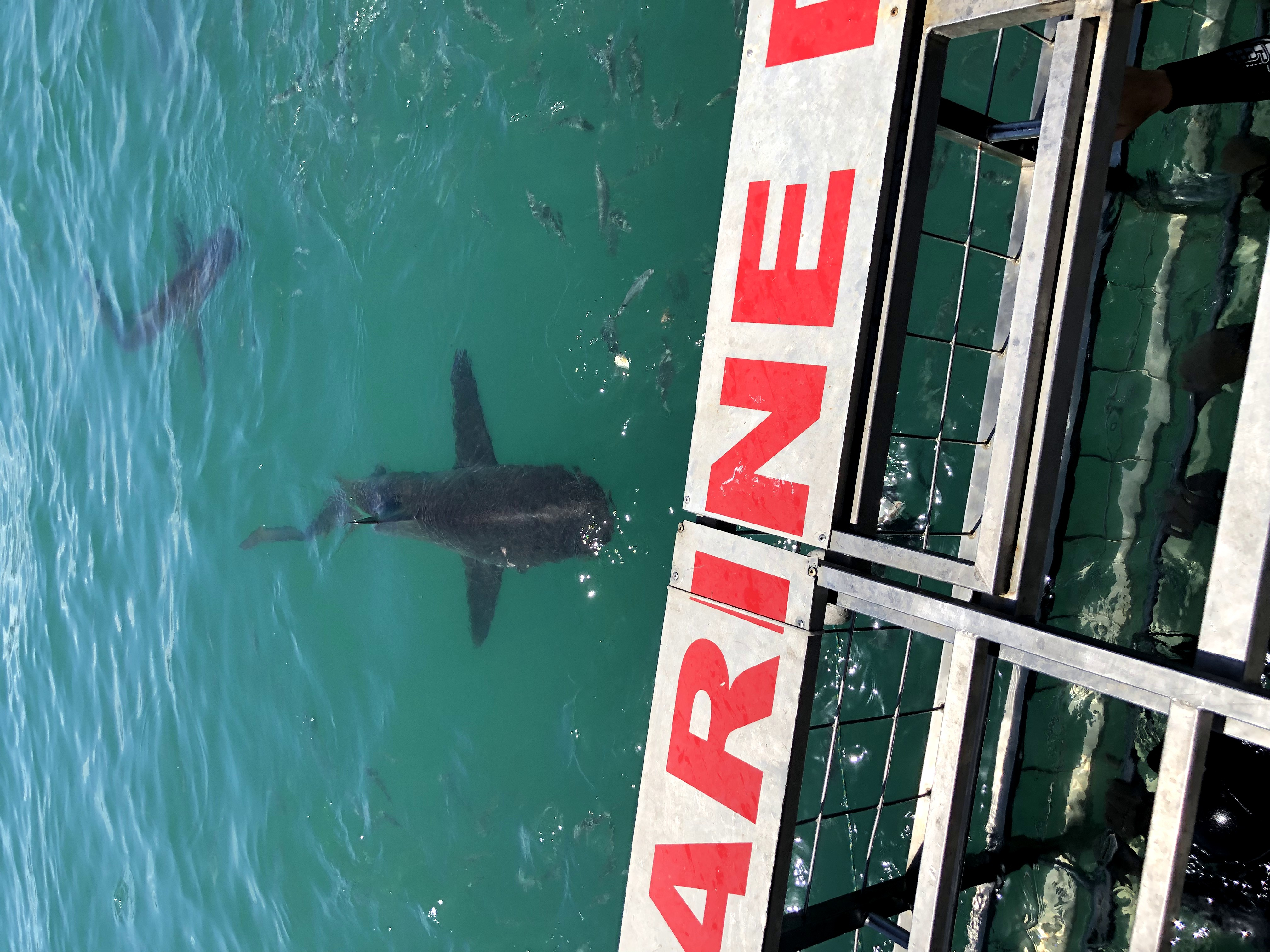 bagno con gli squali
